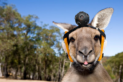 Google street view kangourous