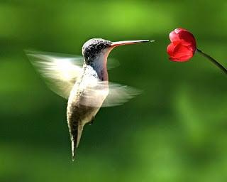 Hummingbird (colibri) : le nouvel algorithme de Google