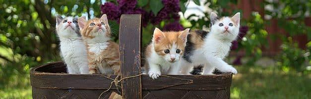 Google propose un site dédié aux chiens et aux chats