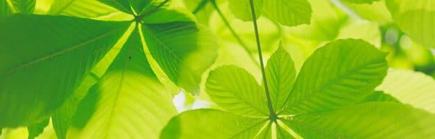 SEO et Développement durable