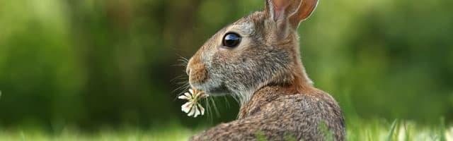 Easter eggs Google pour Pâques