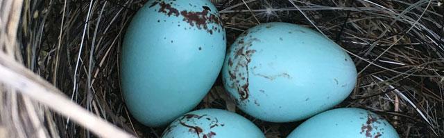 Easter Eggs Google : Nos 30 fonctions cachées préférées du moteur de recherche