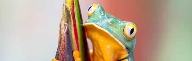Screaming Frog : comment bien interpréter un crawl