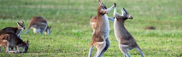 Australie : Google se bat, Bing se place…